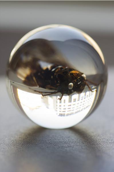 Boule acrylique avec un insecte